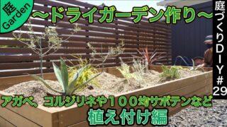 【ドライガーデン作り】アガベ、コルジリネから100均サボテンなど植え付け編《庭づくりDIY#29》
