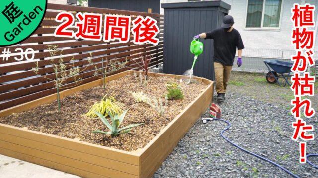 ドライガーデンが完成して2週間の植物の様子 + 土入れ、害虫対策、活力剤散布等でお手入れ【庭づくりDIY#30】
