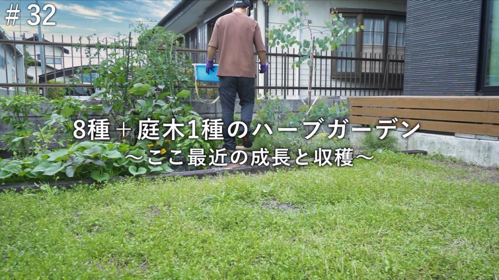 ここ最近のハーブガーデンの成長と収穫【庭づくりDIY#32】